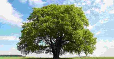 Importance of trees essay पेड़-पौधे का महत्व निबंध